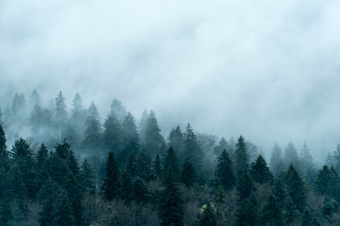 trees-cloudy-1