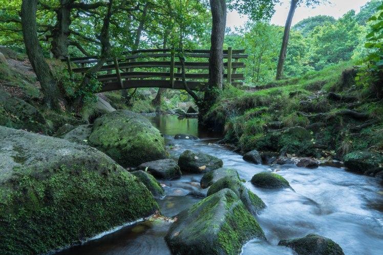 mcr-nature-bridge