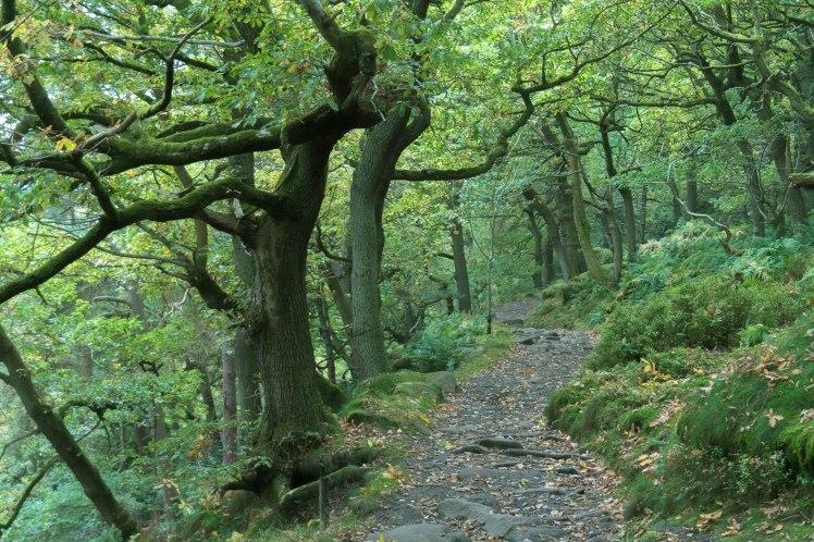 mcr-nature-path-close