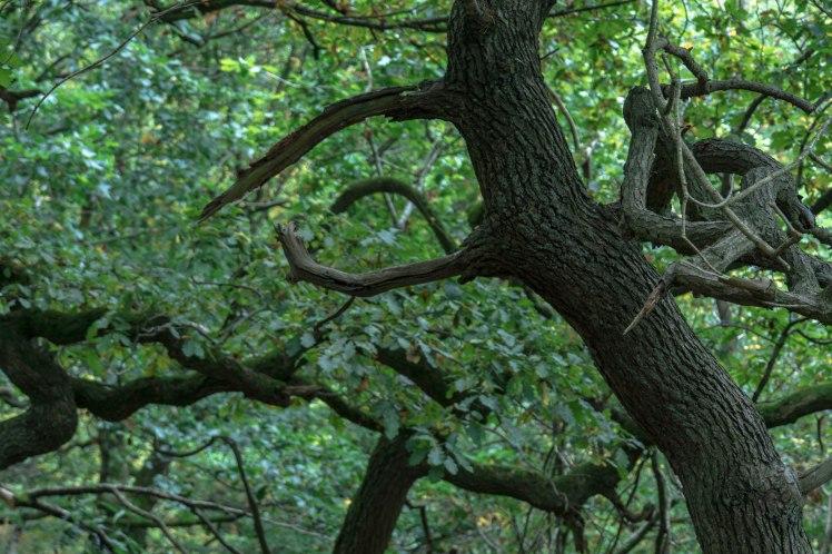 mcr-nature-tree-close