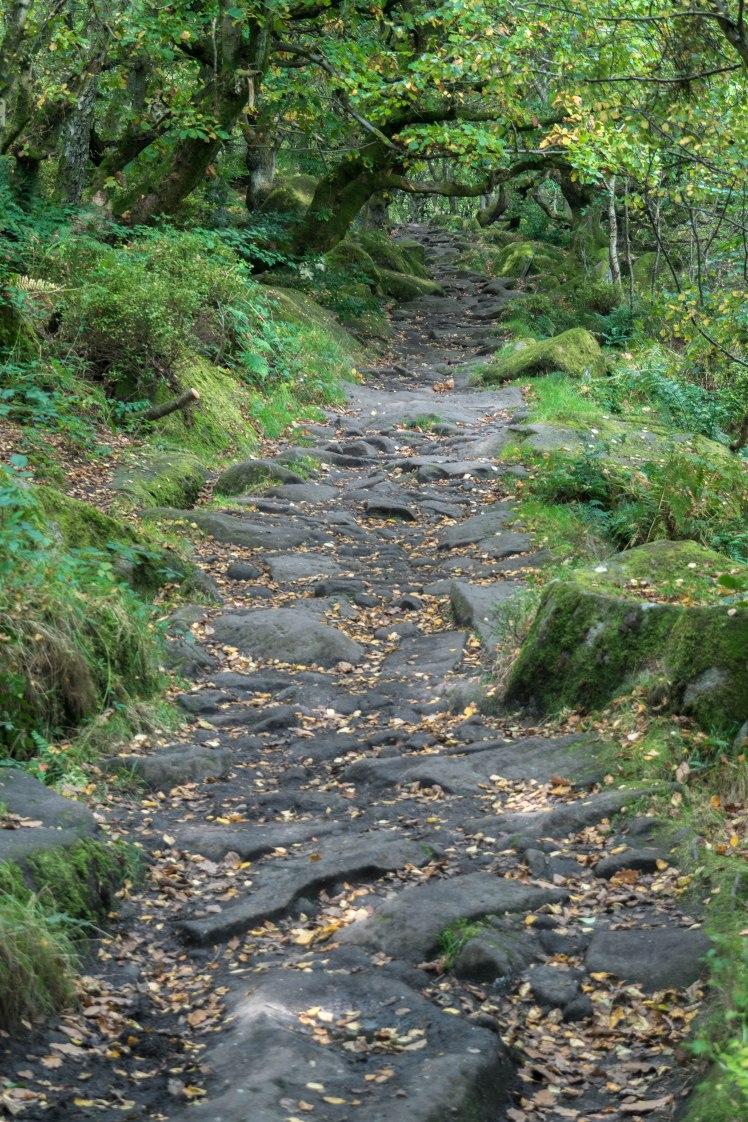 mcr-nature-trees-path