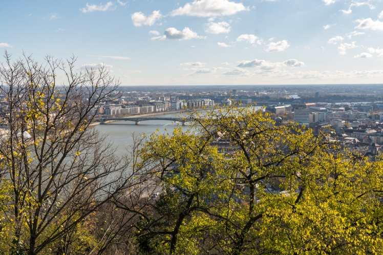budapest-city-through-tree-2