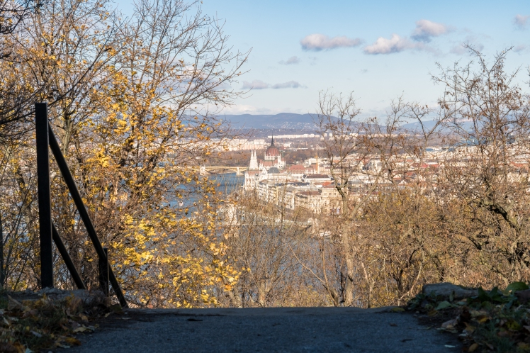 budapest-city-through-tree-4