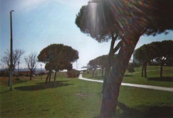 bcn-marbella-trees
