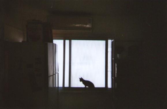 irael-cat