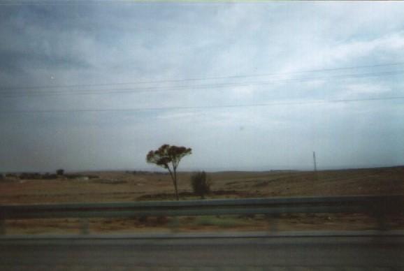 israel-desert