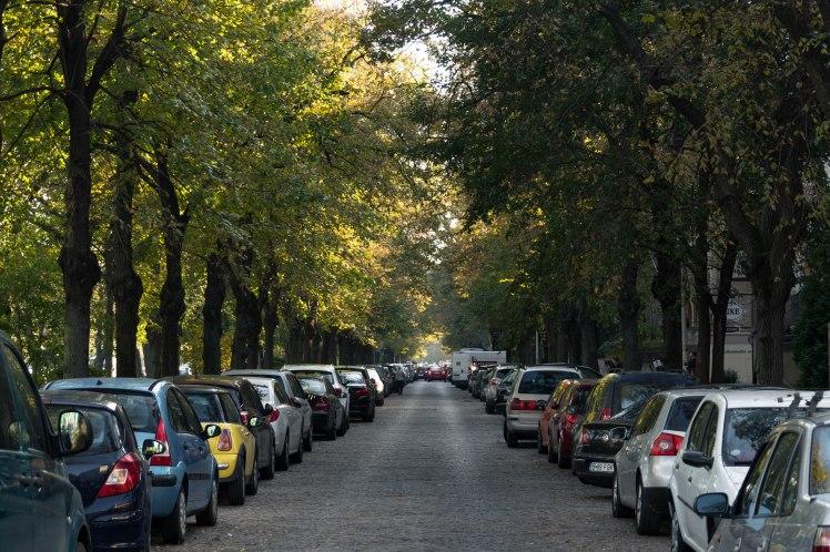 bukarest-street-cars-trees