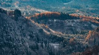 furx-aussicht-bäume-wide